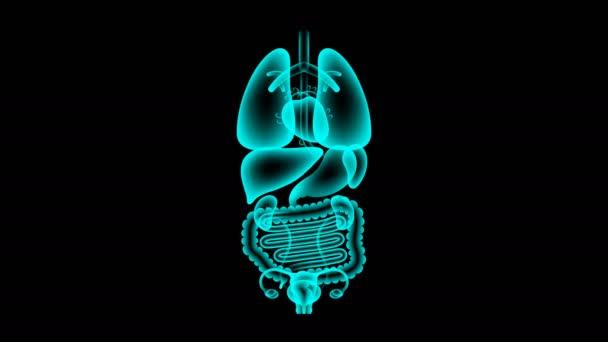 Lidské ženské orgány rentgenové sady, tlustého střeva infekce koncept idea červené barvy obrázku, samostatný záře v tmavém pozadí, bezešvé, opakování animace 4k s kopií prostor