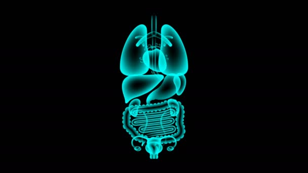 Lidské samice X-ray orgánů sada, děloha a vaječníky infekce koncept idea červené barvy ilustrace izolované záře v tmavém pozadí, bezešvé, opakování animace 4k s kopií prostor