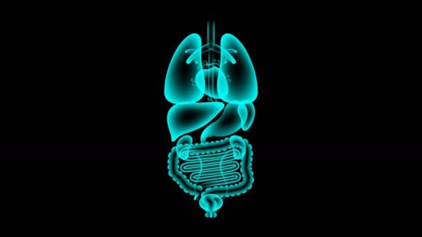 Sada lidské mužských orgánů rentgenové, močového měchýře infekce koncept idea červené barvy obrázku izolované žár v tmavém pozadí, bezešvé, opakování animace 4k s kopií prostor