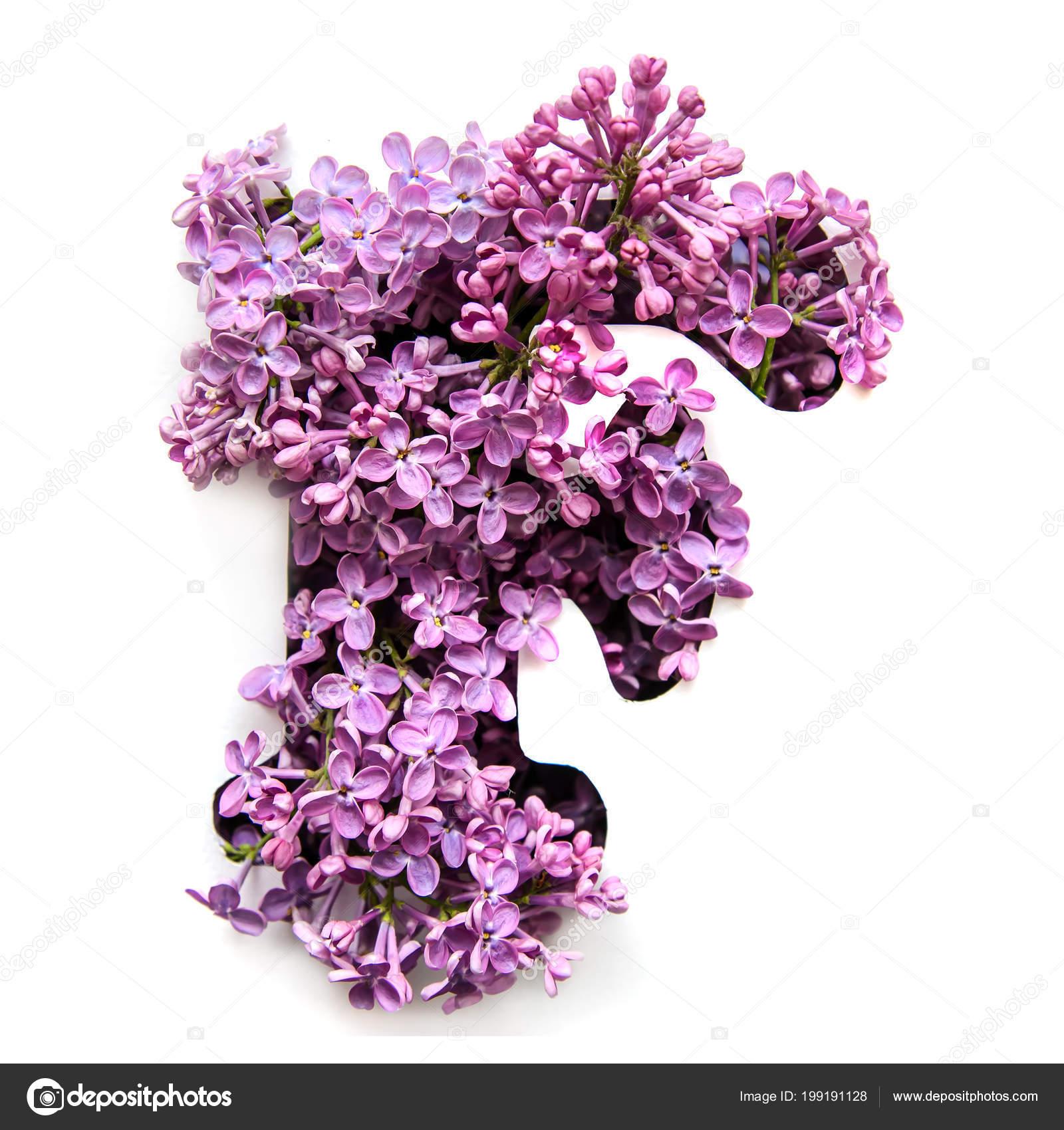 Letter English Alphabet Beautiful Bright Purple Flowers Lilac White Stencil Stock Photo C Elvirkindom Yandex Ru 199191128