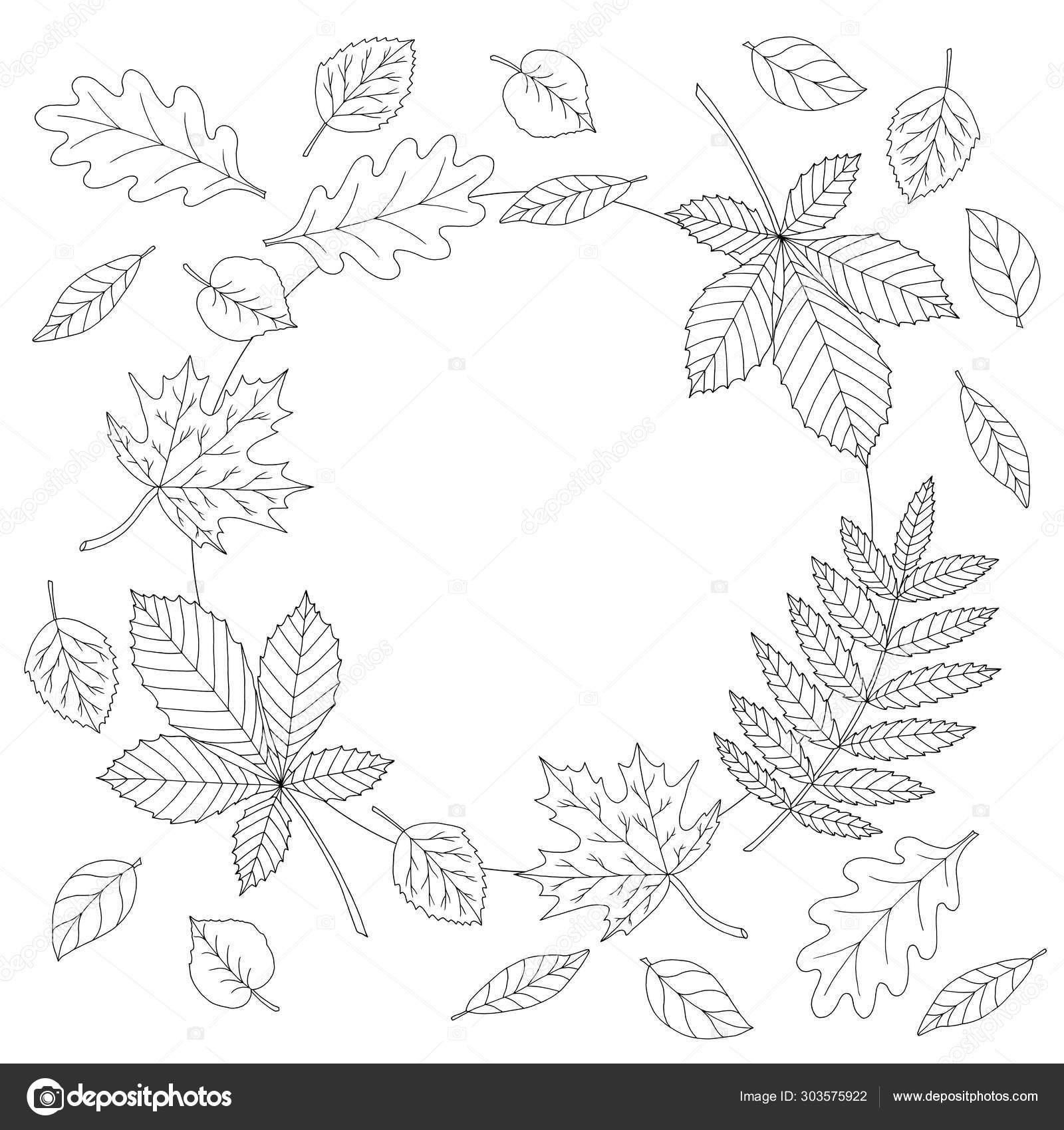 Frame Of Autumn Leaves Coloring Page Vector Image By C Elvirkindom Yandex Ru Vector Stock 303575922