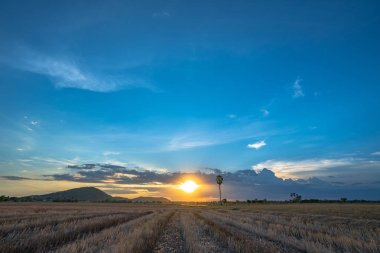 sunset on rice field during planting season