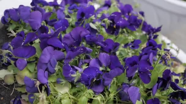 Flowers in city flowerbed
