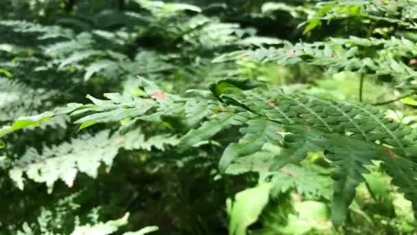 Listy kapradiny v lese detail