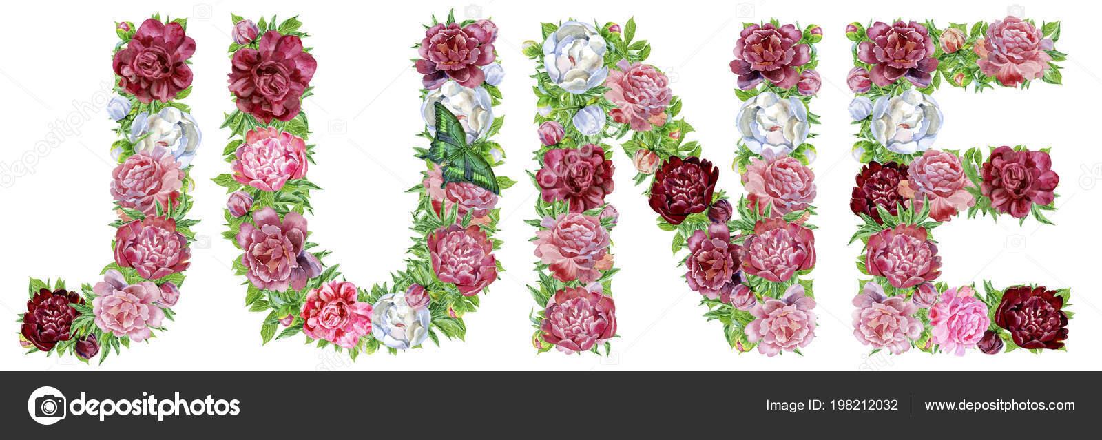 Juni Von Aquarell Blumen Isolierte Handgezeichnete Auf Weissem