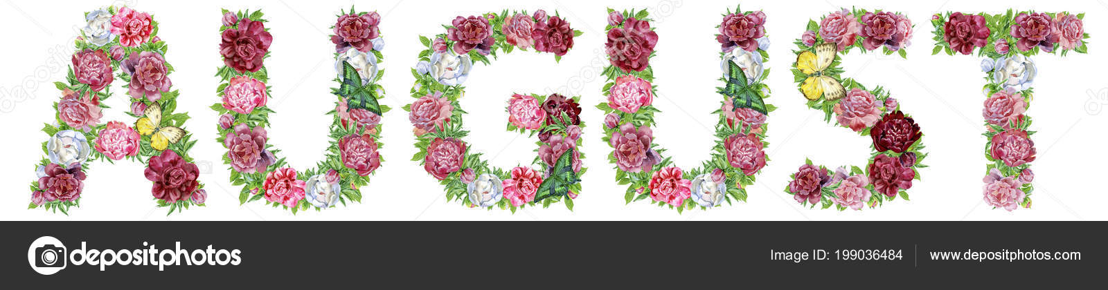 August Von Aquarell Blumen Isolierte Handgezeichnete Auf Weissem