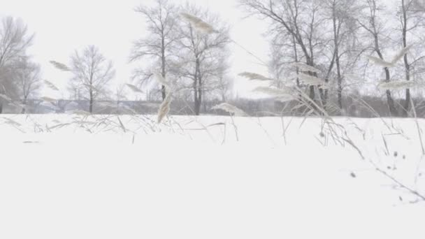 Winter Background With Snowed Grass And Other Plants