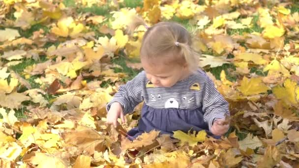 Slow Motion Small Child Playing In Autumn Park.baby Playing With Yellow Leaves
