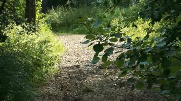 Cesta v podzimním lese. Zelené stromy po obou stranách. Zaměřit na velké pobočky v přední části, zobrazit listím. Rozmazané pozadí. Spousta spadaného listí na zemi. Lesní krajina