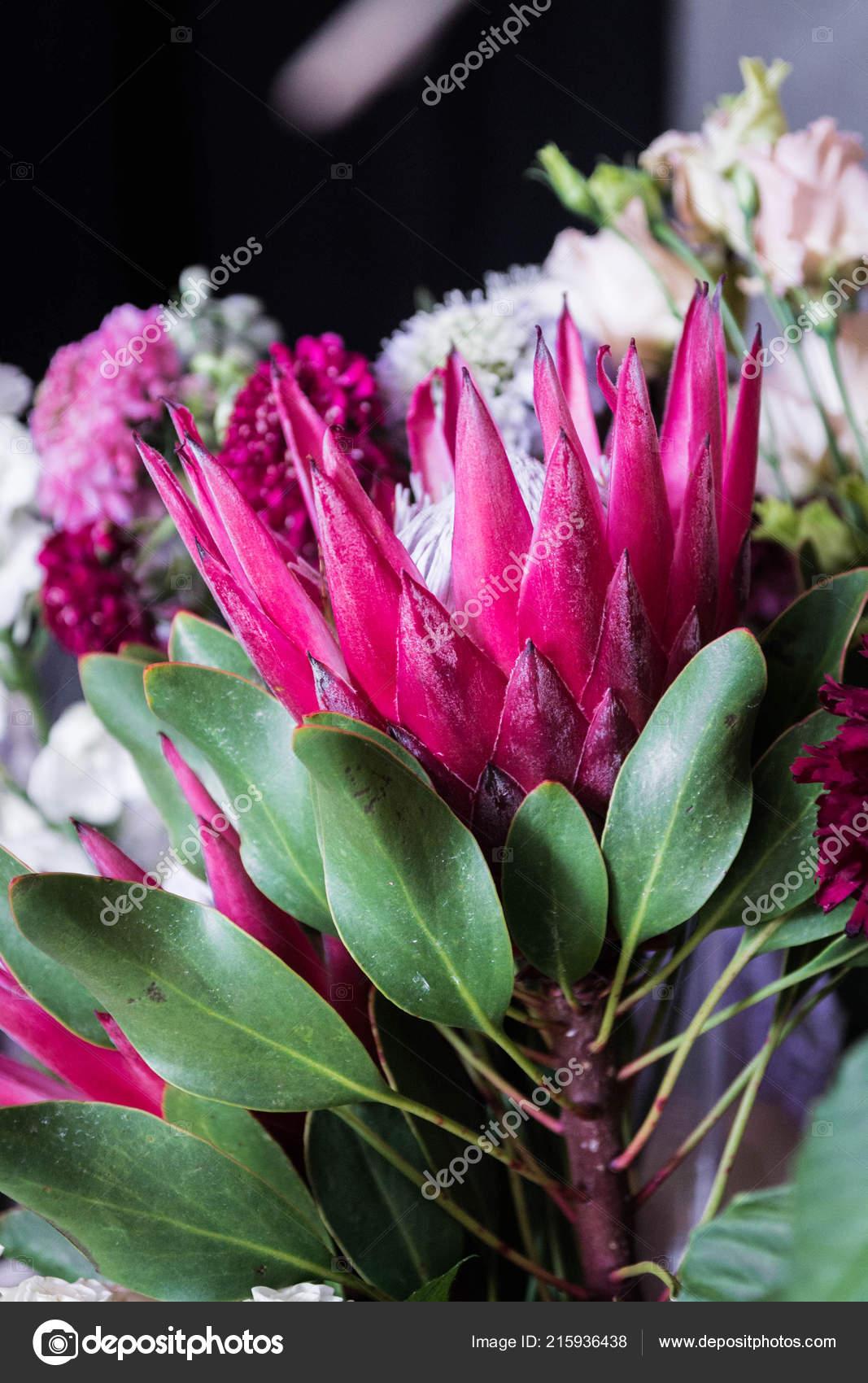 Protea çiçek Açan çiçek Kırmızı çiçek Taç çiçek Stok Foto Vzwer