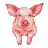 Entzückende kleine rosa Schwein Portrait Aquarell Abbildung isoliert auf weißem Hintergrund