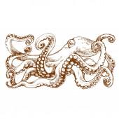 Chobotnice s chapadly. Ručně kreslenou perokresby, vektorové ilustrace, gravírování skica pro tetování, barevné stránky knihy