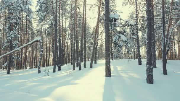 zimní Les panorama