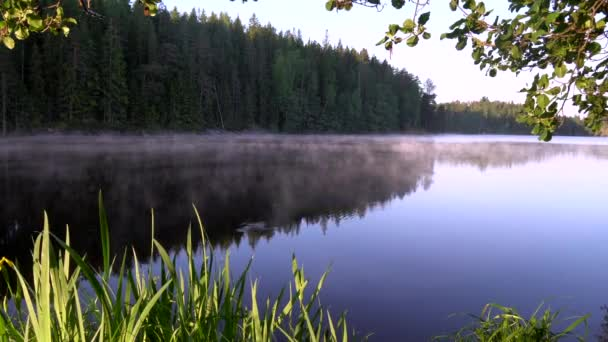 Landscape view of the trees on the side of the lake in Finland