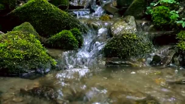 Horská řeka - proud tekoucí přes hustý zelený Les, Bistriski Vintgar, Slovinsko, oddálit záběr