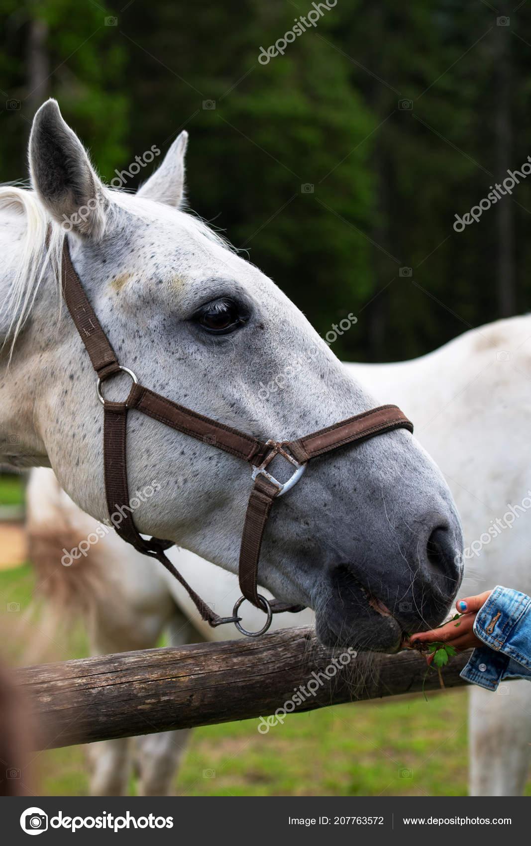 νεαρό άλογο Πρωκτικό fisting δωρεάν πορνό
