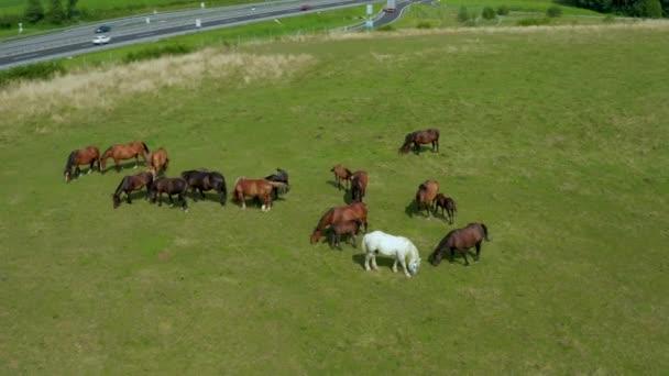 Koně se pasou na pastvinách, letecký pohled na zelenou krajinu se stádem hnědých koní a jediného bílého koně