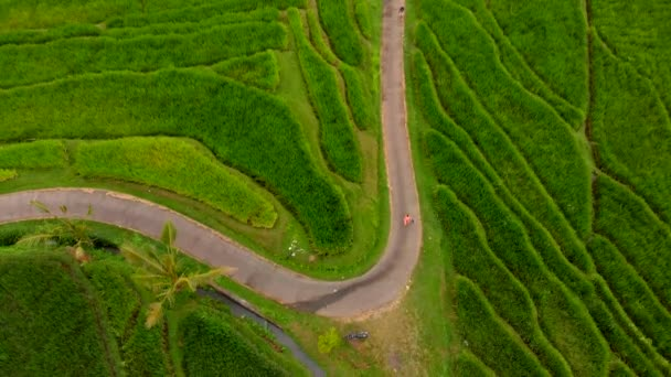 Aerial view of young woman and son walking along rice terraces on Bali island