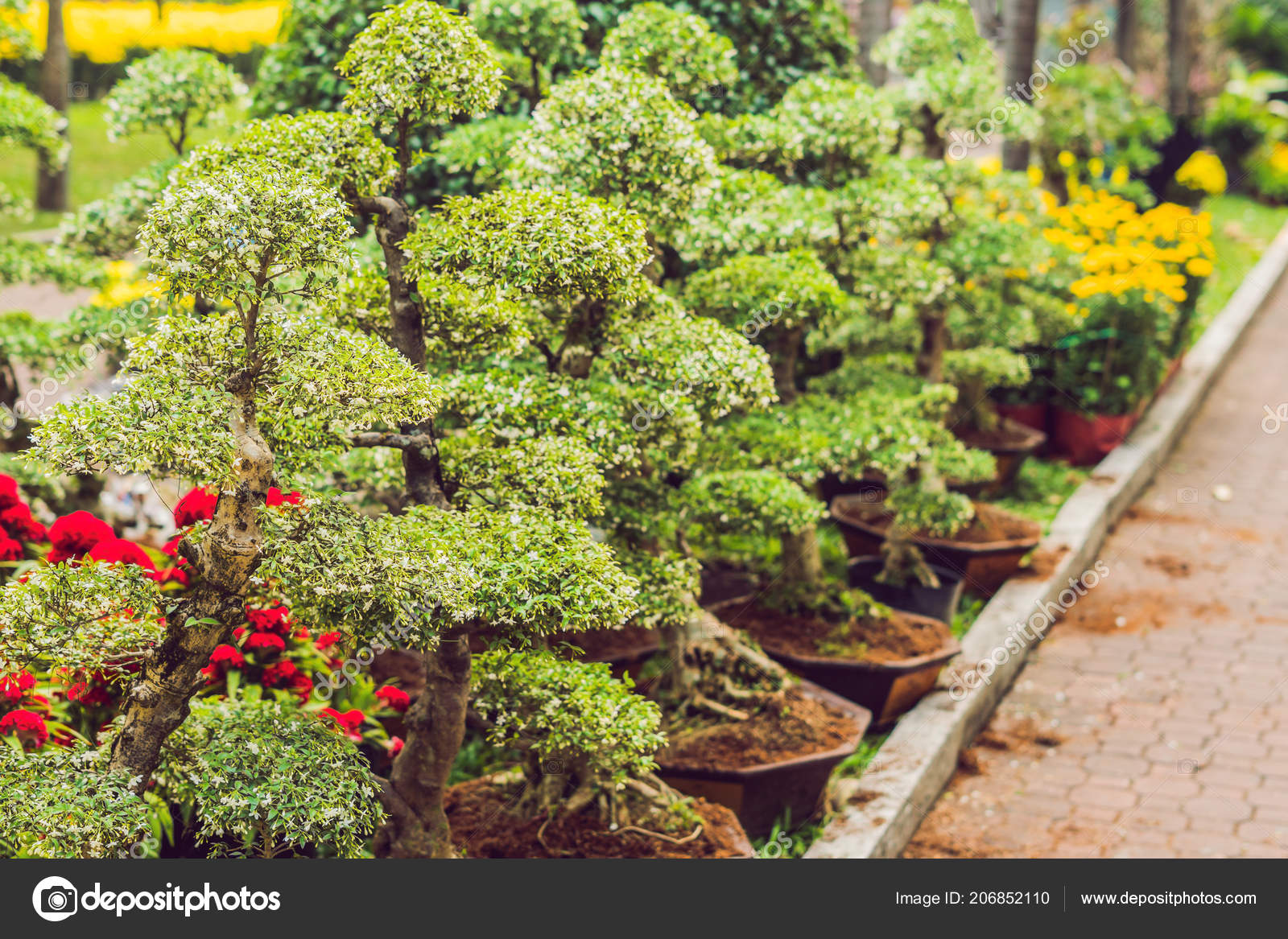Drzewka Bonsai ładna Ozdobne Doniczki Zdjęcie Stockowe