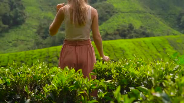 young woman and her son visiting a highlands tea plantations. Fresh, tea concept