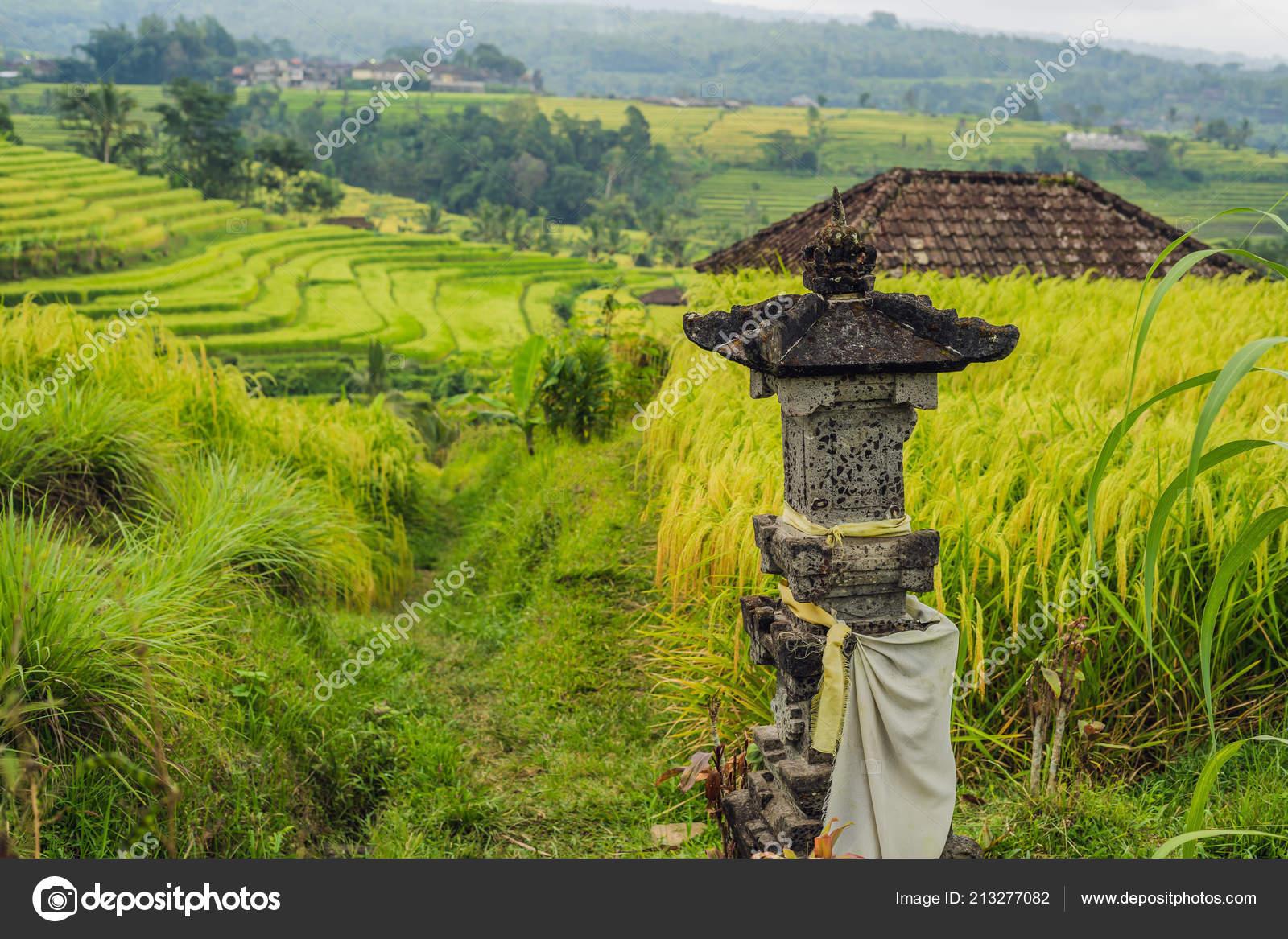 Ancient Statue Jatiluwih Rice Terraces Bali Indonesia Stock Photo