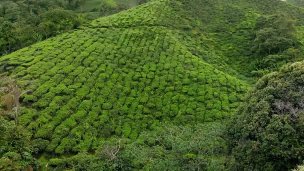 Ripresa aerea di un bel tè piantagioni-terrazze