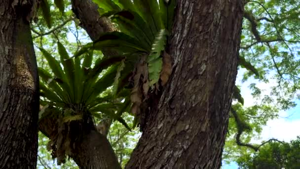 plants epiphytes on a tropical tree