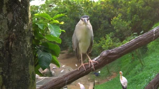 Steadicam shot Park tropických ptáků