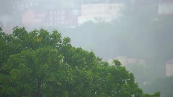 View on trees under the heavy rain and wind. Storm in northern regions concept. Hurricane concept