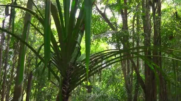 schöne Bäume in einem tropischen Wald mit Sonnenstrahlen, die durch die Blätter kommen