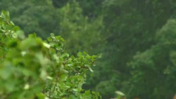 Blick auf Bäume bei starkem Regen und Wind. Sturm in nördlichen Regionen. Hurrikan-Konzept