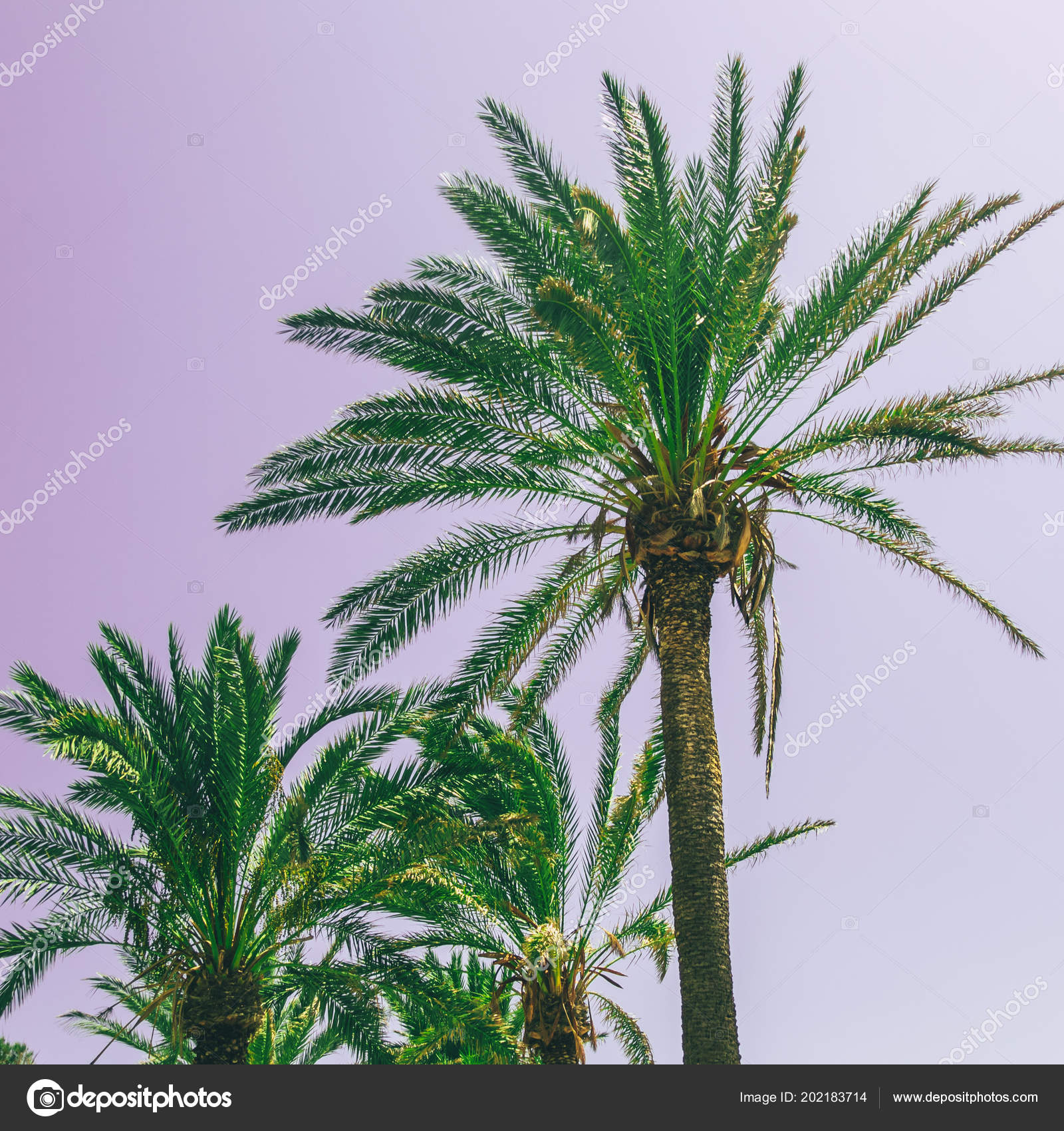 Green Palm Trees Violet Sky Bright Neon Colors Minimal Surreal ...