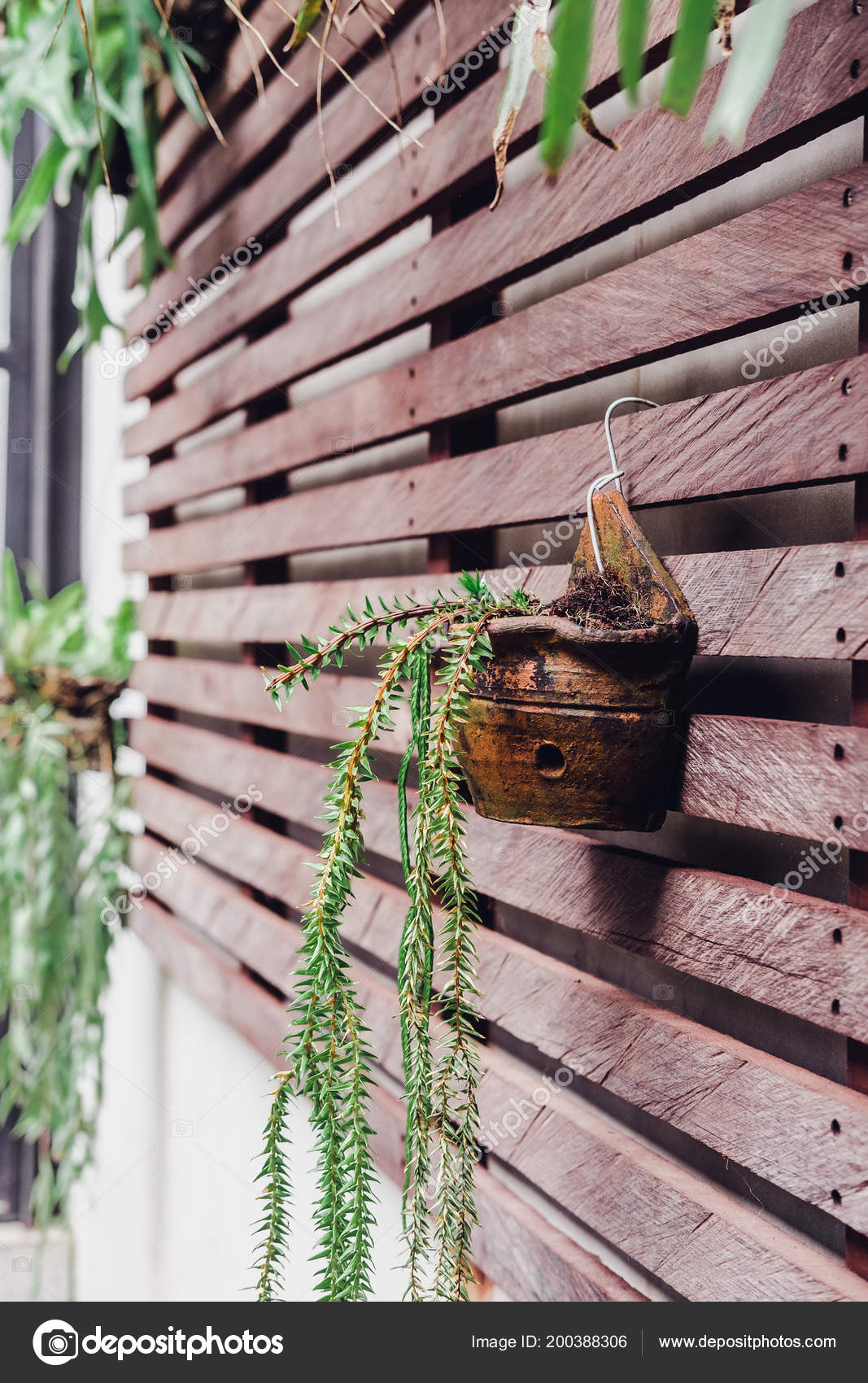 Green Plants Pots Brown Wood Plank Wall Interior Design U2014 Stock Photo