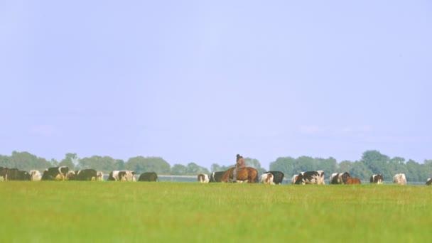 Pastýř na koně na pastvině krávy na louce