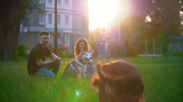 Hund Hunderasse Irish Red Setter, junges Paar, sich erholend auf dem Rasen im Sommer Sonnenuntergang laufen