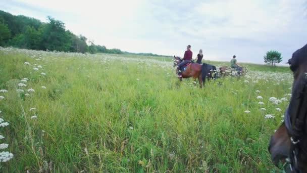 Ló eszik füvet előtt lovas, a lovaglás legelészik a réten portréja