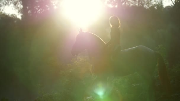 Girl rider on horseback standing in the woods in front of the sun early in the morning, insanely beautiful summer landscape