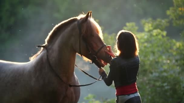 Girl stands with a horse in the middle of the forest, she tries to calm the horse, in the morning sun