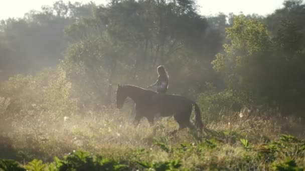 Young beautiful girl with long hair rides a horse on the edge of the forest at dawn, beautiful rays of the sun