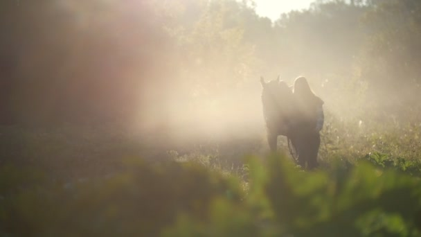 Young girl walking with a horse on the edge of the forest in the rays of the beautiful morning sun, silhouette