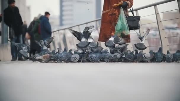 Huge flock of pigeons eating bread.