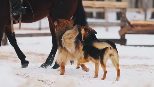 Koňovi chůzi na zasněženém povrchu. Psů, kteří v jeho okolí