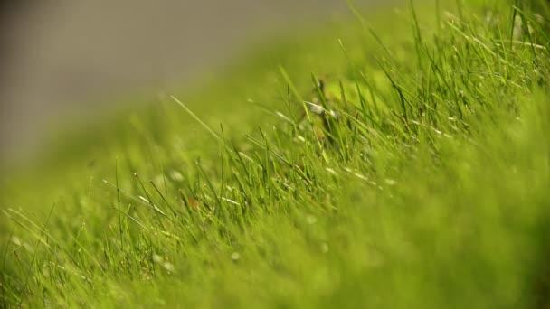 Svěží zelenou trávu na louce