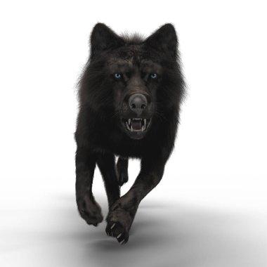 3D Snarling Wolf Running