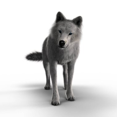 3D illustration rendering of a white wolf looking intently into the distance. Particularly suited to paranormal, wildlife, horror, thriller and many other genres of book cover art. One of a series.