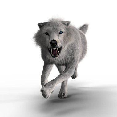 3D illustration rendering of a running snarling white wolf. Particularly suited to paranormal, wildlife, horror, thriller and many other genres of book cover art. One of a series.