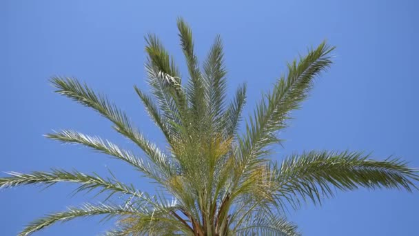 One palm tree blowing in the wind with blue sky background. Low angle view
