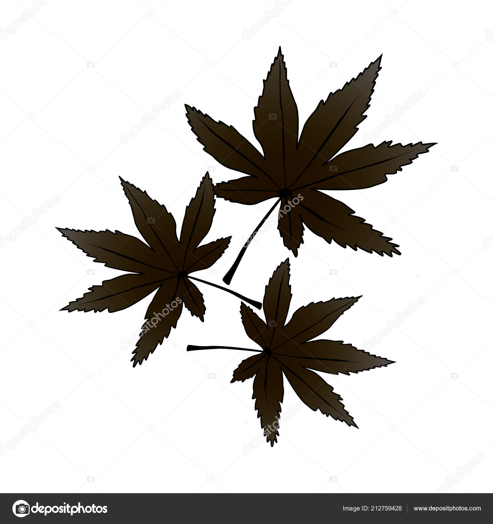 Maple Leaf Vector Icon Leaf Illustration Canada Symbol Black Maple