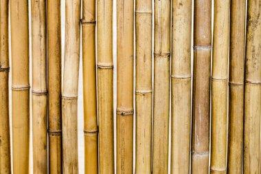 Bamboo dry yellow segment pattern