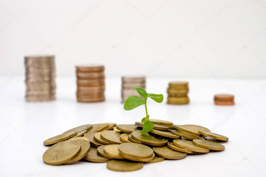 Sprout growing on pile gold coins with blurred coins decrease